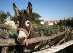 Imagem típica de Istria
